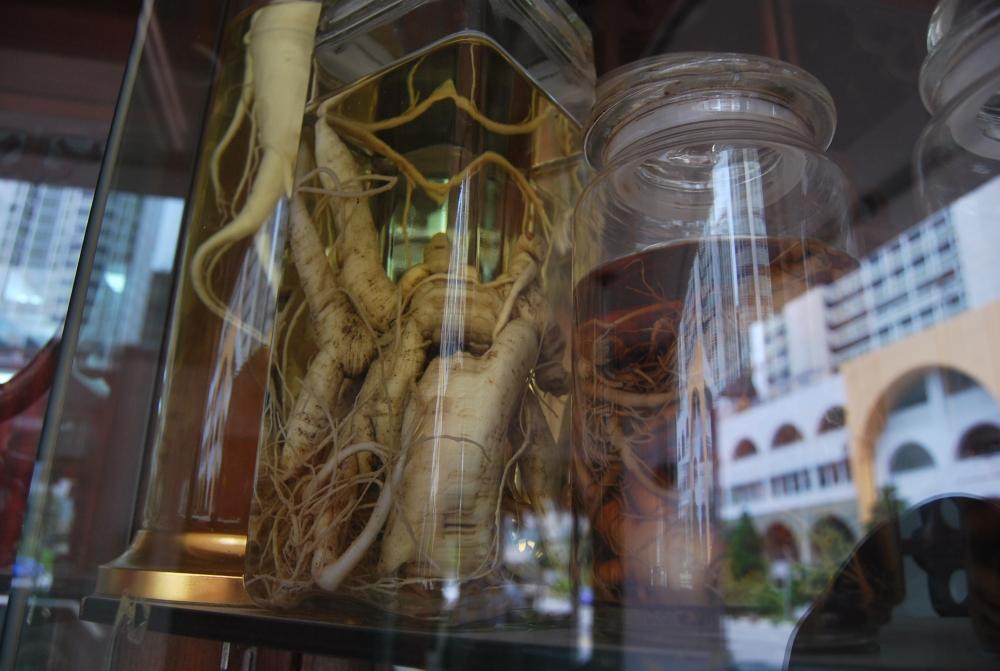 Il ginseng - la radice della vita