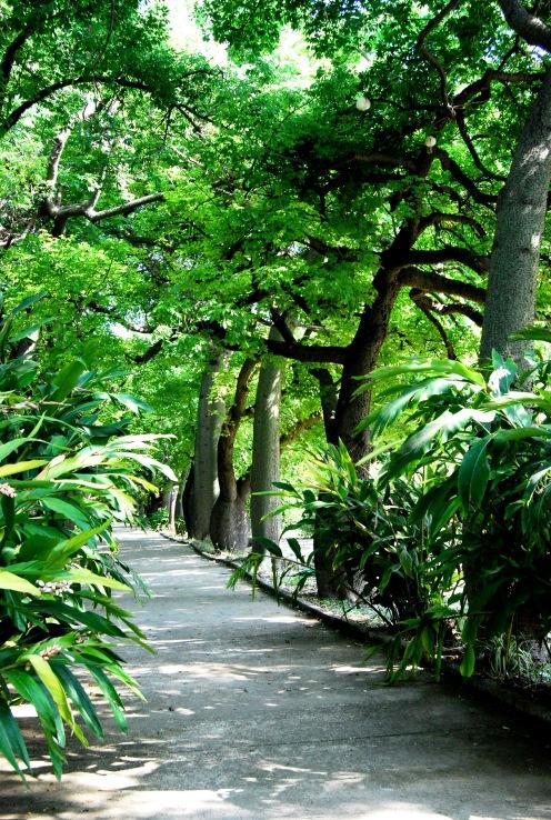 Orto Botanico. Palermo