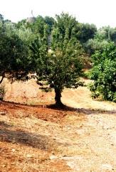 La Trullarella