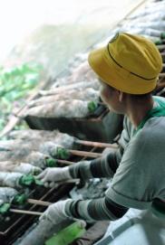 thai may-june 2011 543