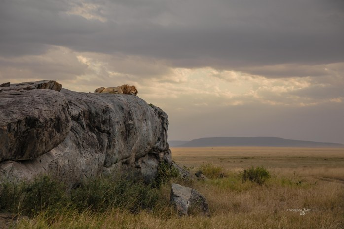 La Rupe dei Re.Tanzania, Serengeti National Park