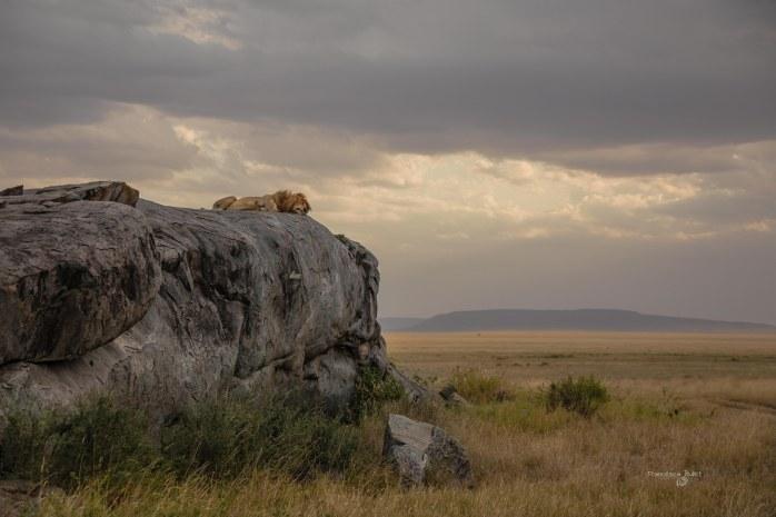 La Rupe dei Re.Tanzania, Serengeti National Park