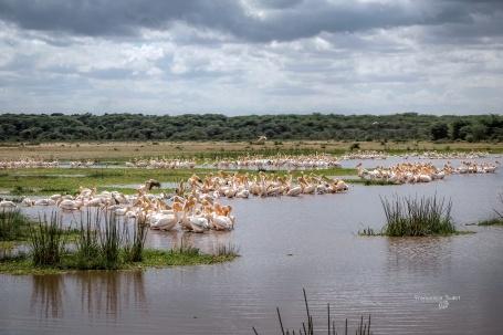 Lake Manyara. Tanzania - Manyara National Park
