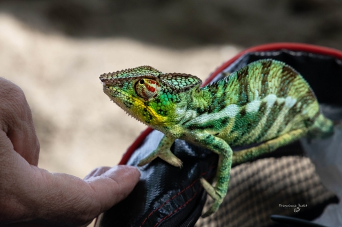 Sguardi. Madagascar, Lokobe Nature Special Reserve Nosy Be