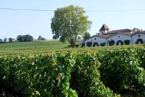 Grand St. Emilionnais. Chateaux e filari