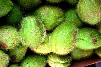 Le zucchine pelose siciliane