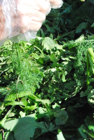 Le erbe selvatiche sui banchi dei mercati