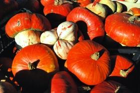 I sapori dell'autunno
