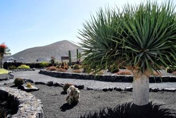 Il piccolo Giardino dei Cactus alle cantine El Grifo