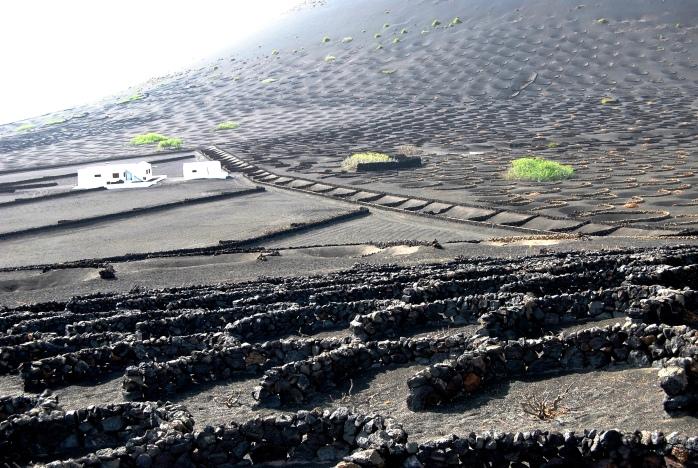 La Valle de La Geria. In primavera, il verde delle viti sul nero del mare di cenere è pura bellezza