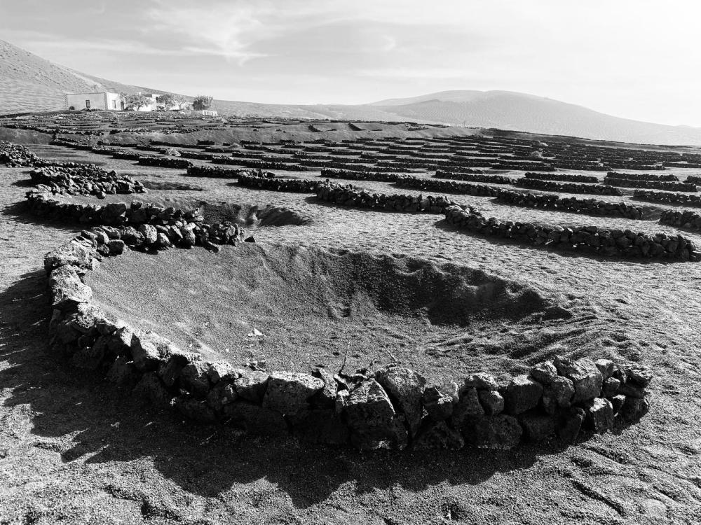 """""""Hoyos"""", le grosse buche a imbuto che caratterizzano il paesaggio vitato di Lanzarote"""