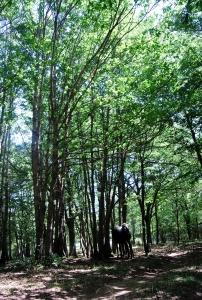 Ampie zone boschive che si alternano a radure e pascoli