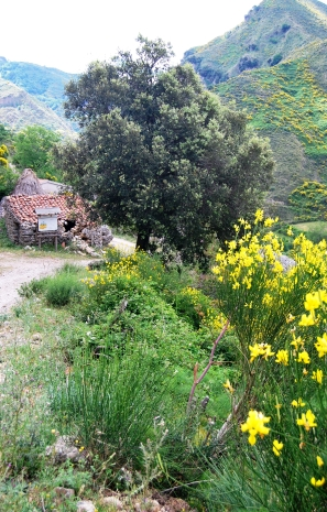 L'antico villaggio dei pastori in contrada Molisa