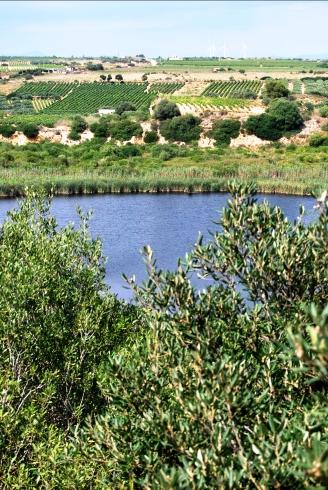 Il regno della testuggine palustre siciliana