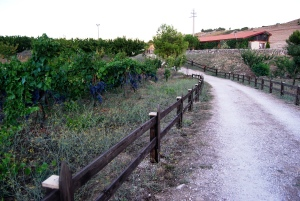 Il percorso inizia tra vigne e stalle