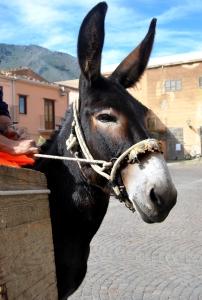 Gli asini a Castelbuono: risorsa smart e green