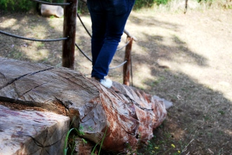 Un vecchio tronco diventa scala