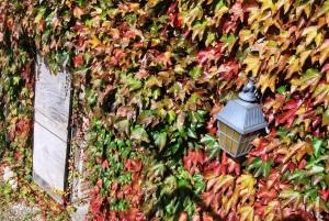 Foliage al forte