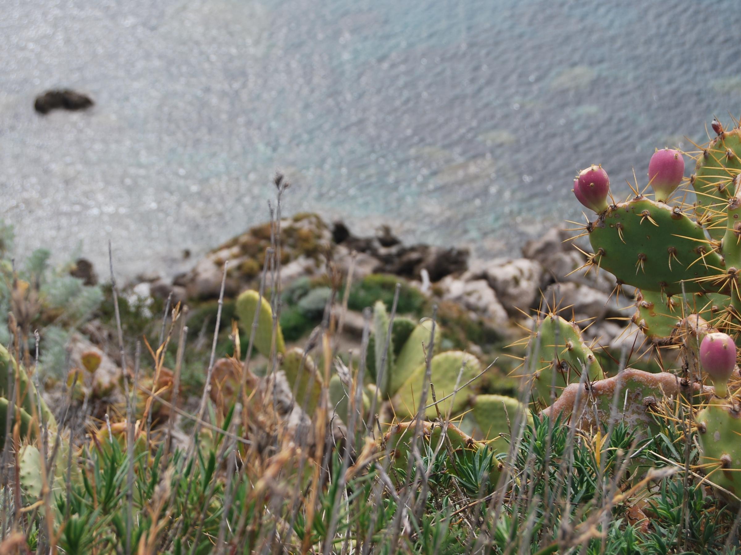 AMP - Area Marina Protetta Capo Milazzo